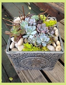 Sweet Cluster of Baby Succulents